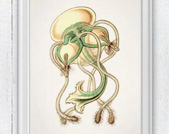 Wall decor poster Jellyfish 03 - sea life print - Marine  sea life illustration A4 print SPOJ025