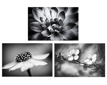 Black and White Flower Print Set - set of 3 flowers bedroom decor grey gray 11x14 black and white photography 8x10  botanical gallery wall