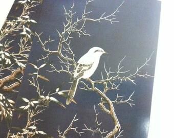 Crazy Sales - Lovely Bird  Postcards Set - 2 Cards