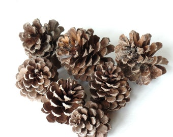 """Pinecones, 2"""" - 3 1/2"""", Rustic, Wedding, Christmas Holiday Decor, Autumn, Fall, Craft Supplies, Fillers, DIY Ornaments, A102"""