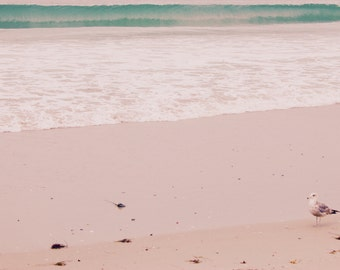 Lonely bird, pastel beach