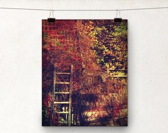 Secret Garden, Autumn Wall Art, Fall Colors, Brown Red Orange Yellow