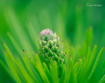 Nature photography, light green, bright green, country, rustic, bokeh, summer, bud, red, hatching