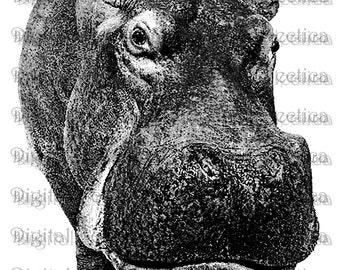 Hippopotamus Engraving. Hippo PNG. Hippo Prints. Hippo Images. Hippo Pictures. Hippo Art. Hippo Clipart. Hippo Drawings. No. 0187.