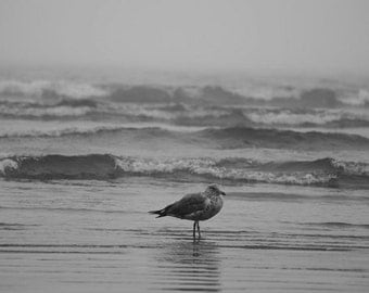 Seagull swept up in the waves, Lynn MA, Nahant MA, Seagull photography, Seagull Art, Seagull Decor, Ocean Decor, Ocean Art, Ocean Print