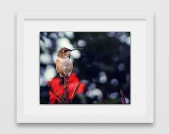 Bokeh Bird | Hummingbird Photography | Nature Photos | Garden Gifts | Gifts Under 30