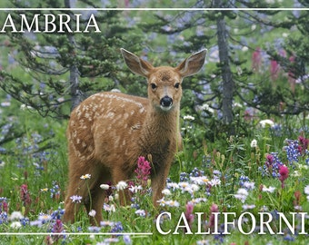 Cambria, California - Deer Fawn and Wildflower (James T. Jones Photography) (Art Prints available in multiple sizes)