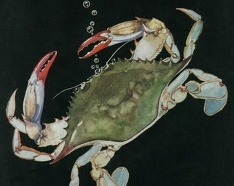 Nature Magazine - View of a Blue Crab (Art Prints available in multiple sizes)