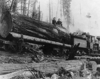 Logging Train carrying men and 12 foot diameter Fir Trees Photograph (Art Prints available in multiple sizes)