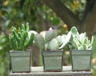 20 Party Favors Mini Succulent Plants in Ceramic Pots