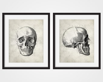 Skull Art Print, Anatomy Art, Skull Wall Art, Human Anatomy, Set of Two, Medical Student Gift, Medical Art, Doctor Gift