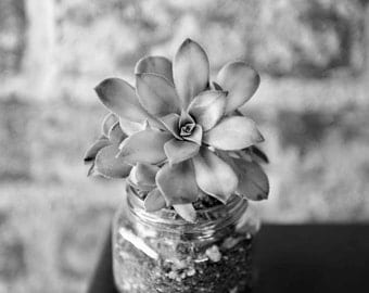 Black and White Succulent Cactus Bontanical Fine Art Photography - Brick, Rustic, Chic, Glass Jar, Floral