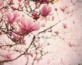 Pink Magnolia Photograph  - Flower Photography-  - Pink - Home Decor - Wall Art - Floral Fine Art