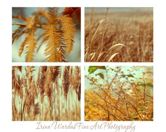 Photography, nature print set, four 11x14, 8x10 nature photographs, aqua mint gold pictures, golden bronze ochre wall art, botanical art