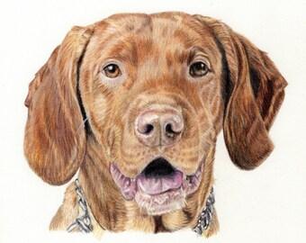 Custom Dog Portrait-colored pencil dog drawing -original dog art-Viszla-dog illustration- dog memorial-dog sympathy-commissioned art