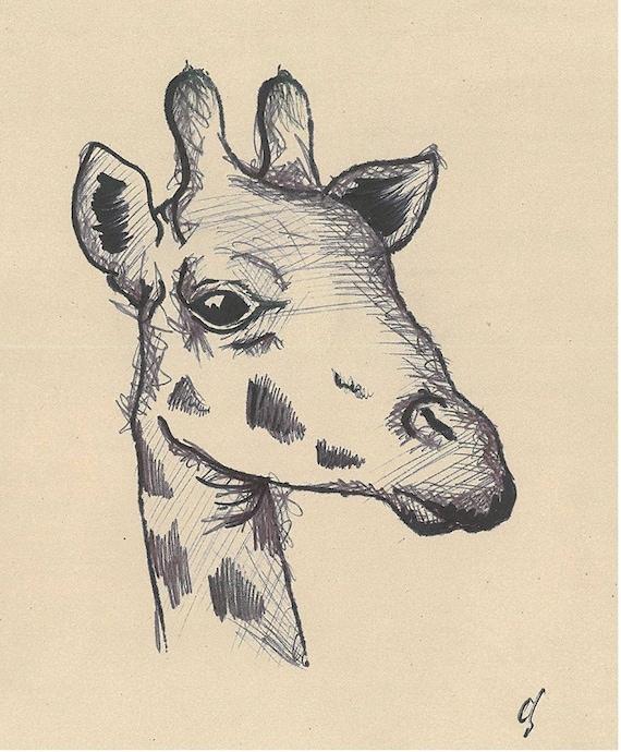 Giraffe Pen Drawing - Poster Print