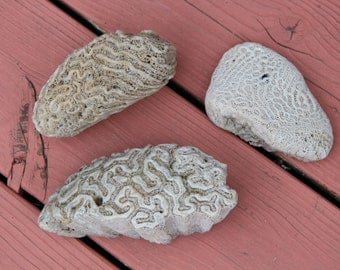 3 Large Pieces of Natural Coral, beach find, display or craft uses, cottage chic
