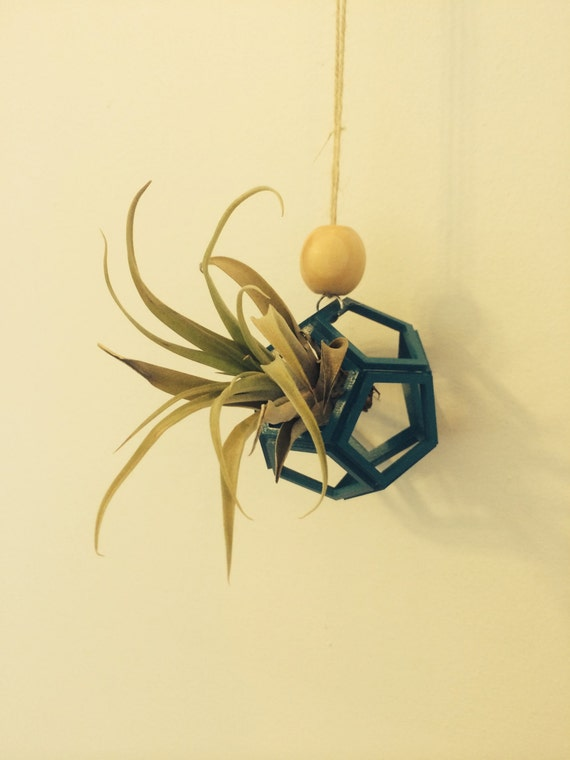 Air plant holder geometric air plant holder geometric air for Geometric air plant holder