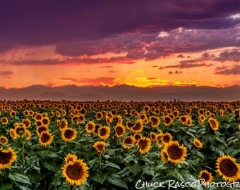 Photo Art - Photography - Sunflowers - Sunset