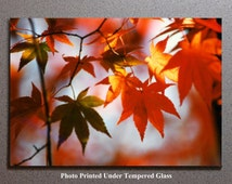 Leaves Cutting Board Cheese Serving Tray Trivet, Red Orange Yellow Leaf Autumn Fall Tree Sunrise Sunset Dusk Dawn Nature Landscape