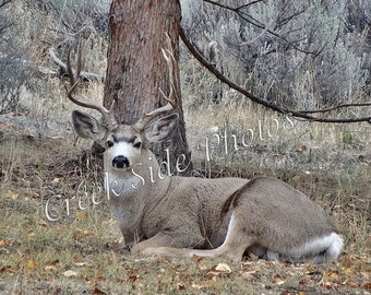 Instant Digital Download, Beautiful Buck, Male Deer, Antlers, Nature, Oregon High Desert, Wall Art