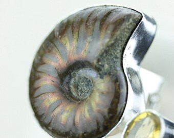 Size 7 FILIGREE WORK AMMONITE Fossil  (Nickel Free) 925 Fine S0LID Sterling Silver Ring & Free Worldwide Express Shipping r1529