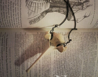 Vertebrae Necklace, Bone Jewelry, Bone Necklace, Oddities, Curiosities, Oddities Necklace, Taxidermy Necklace, Vulture Culture
