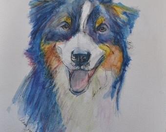 Australian Shepherd Fine Art Print