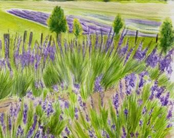 Lavender farm print, Michigan landscape, fine art watercolor giclee, violet intrigue, cottage decor, up north, lavender flower garden