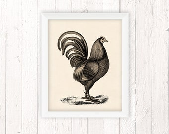 Farmhouse Decor, Rooster Print, Rooster Decor, Chicken Art