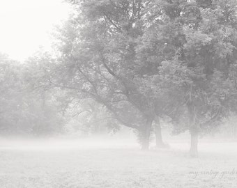 fog rolling in - b & w-tree photography- foggy photo-black and white photography (5 x 7 Original fine art photography prints) FREE Shipping)
