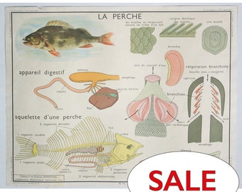 French School Chart 1950s Perch Frog Editions Rossignol