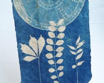 botanical print, cyanotype on handmade paper, pressed leaf art, secret life of my garden
