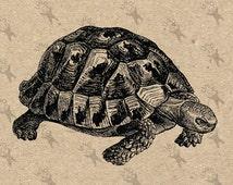 Vintage image Antique Turtle Reptile Instant Download Digital printable picture clipart graphic -burlap, kraft, decor, mail art etc HQ300dpi