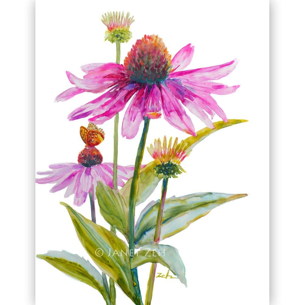 Watercolor Flower Painting: Purple Cone Flowers Original Painting Echinacea Floral Wall