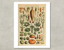 Legumes And Vegetables Print, 1907 - 8.5x11 Reproduction French Dictionary Color Plate - also available in 11x14 13x19 - see listing details