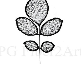 Thermofax Screen Leaf Cluster