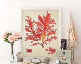 Antique Botanical Wall Art Print Sea Weed Marine Plant Giclee Vintage Home Decor Natural History Art Colorful Decorative Reproduction SL003