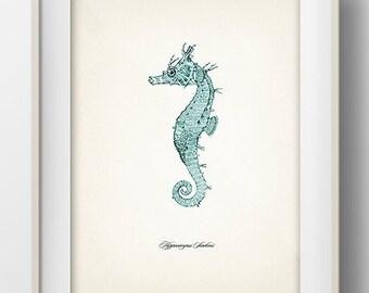 Blue Seahorse Print 4 - SH-09 - Fine art print of a vintage natural history antique illustration