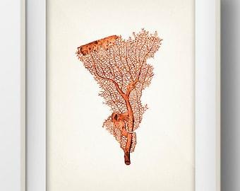 Orange Coral 1 - 8x10 - Fine art print of a vintage natural history antique illustration,