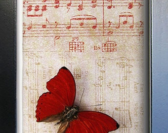 Vintage Music Paper With Red Heart Cymothoe Sangaris Real Butterfly Art Display