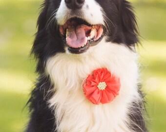 Dog collar flowers, Girl dog accessories, dog, Flower dog collar, Dog collar embellishment, Dog collar decoration, dog collar, collar bling,
