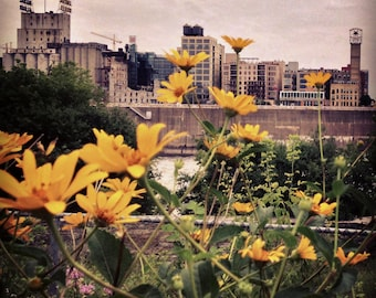 Wild Flowers, Wild Skyline - 4x4 Photo Print
