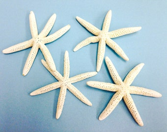 Starfish with Six Arms