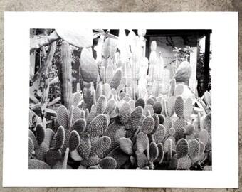 Cactus Garden screen print 18x24