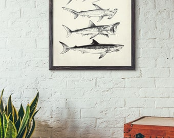 Sharks and Fish -  Vintage style marine life print - Home, Kids Room , or Office Decor,No419,441