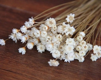 50 pcs  Baby's breath , A small pack of dried flowers ,for Filler of the mini glass bottles,MINI Star daisy flowers(122-45)