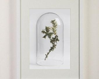 Native Australian Flora Digital Print