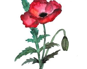 "original watercolor poppies 11""x15"""