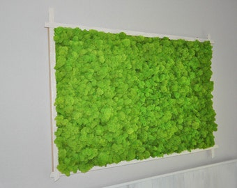 MOSS picture / / Moss picture / / preserved Moss & ferns //Islandmoos green style nature art Moss 120 cm x 80 cm